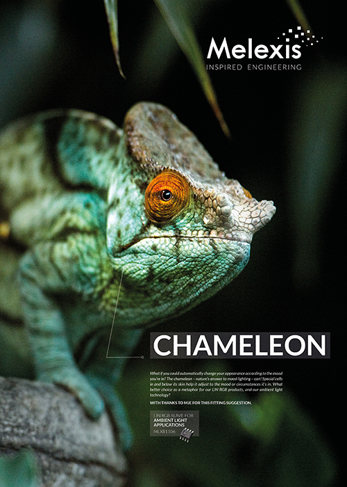 MELE_007 Animals posters_50x70_BE_Chameleon3